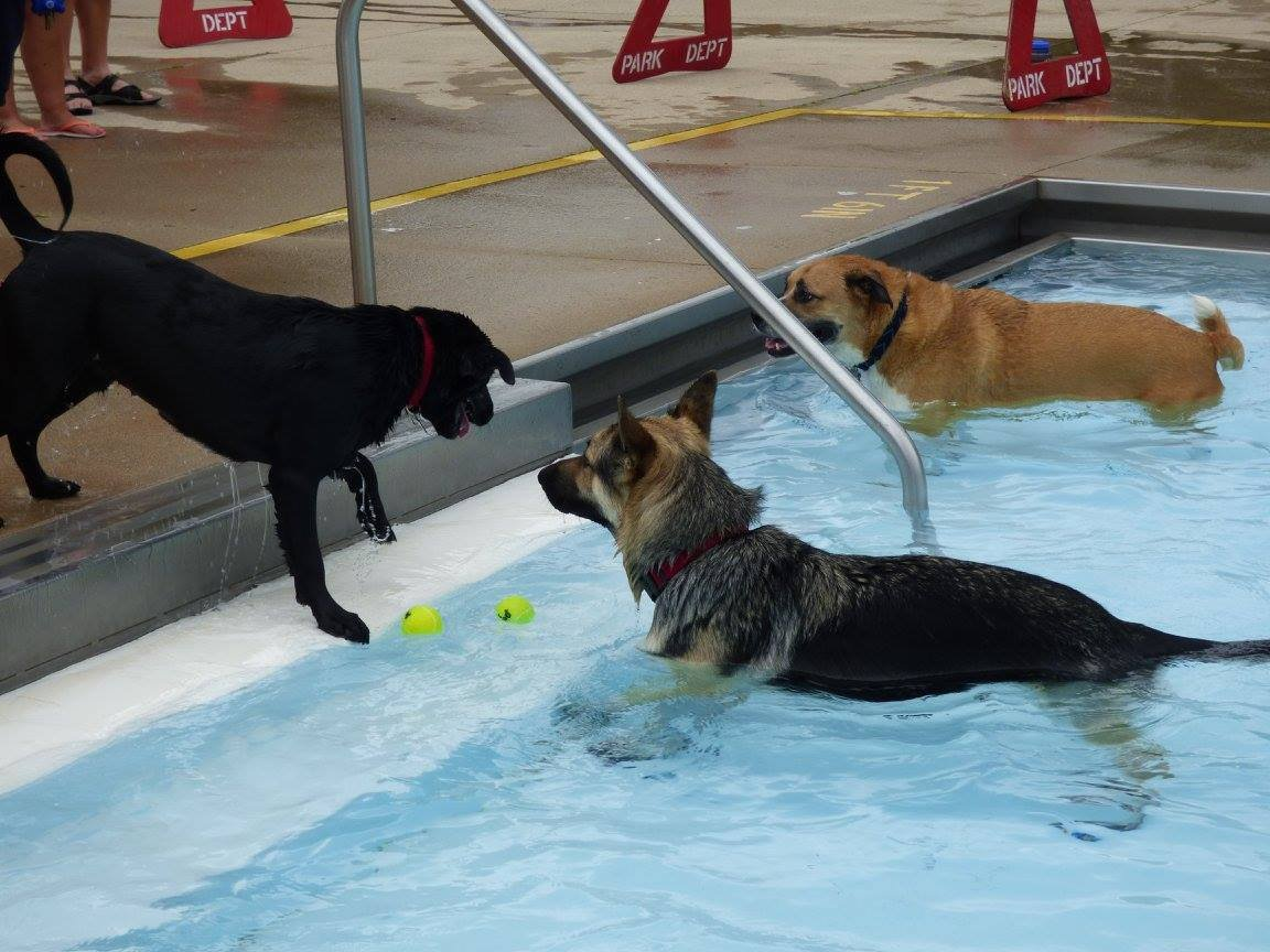 "Pups take part in the 2016 ""Dippin' Dogs"" event at Northside Pool"