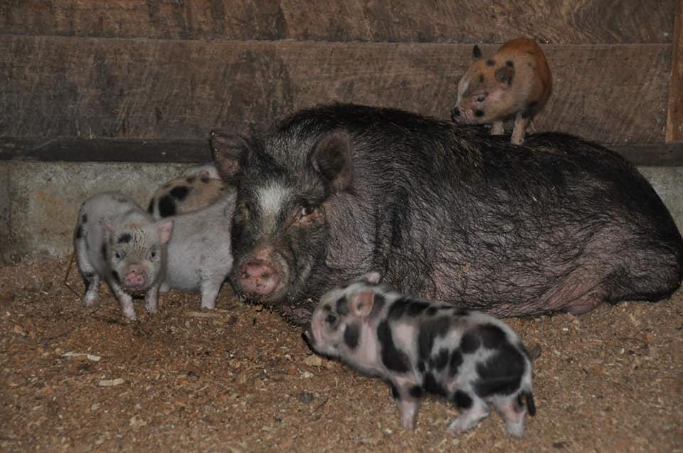 Photo//Owen County Humane Society