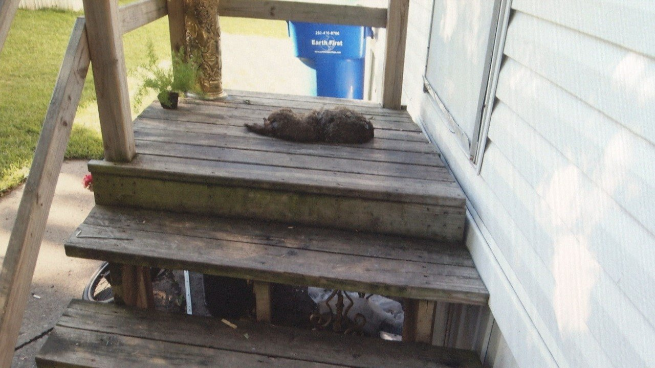 Dead animal left on new haven familys porch investigated as ra new haven ind wpta 21 sciox Image collections