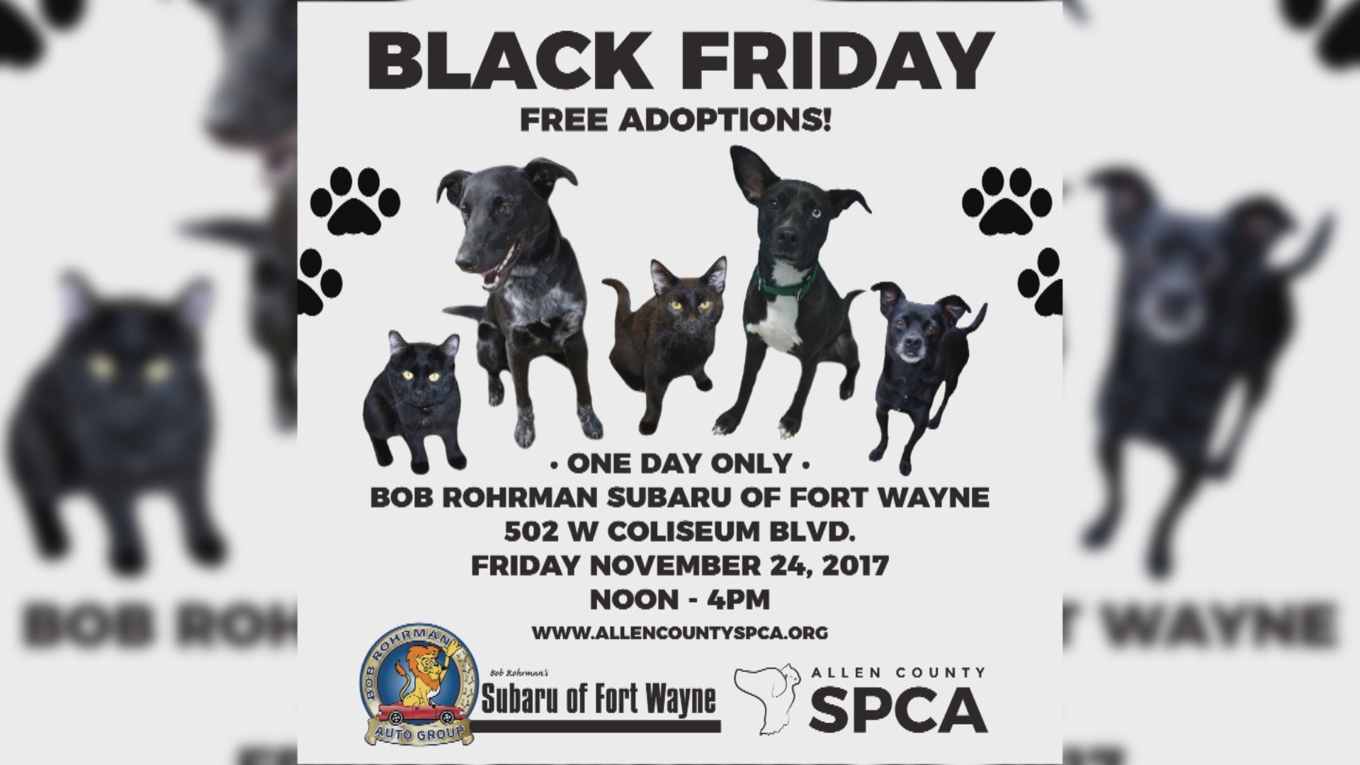Allen County SPCA hosts black Friday adoption event ABC21 Your